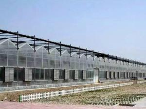 Sunshine Plate Greenhouse