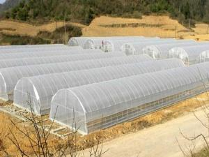 Simulations Greenhouse