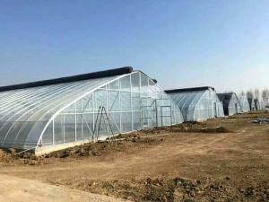 New Greenhouse Shed
